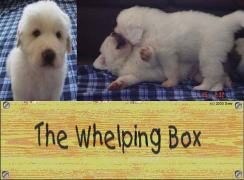 whelping box